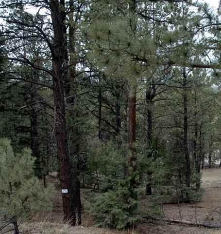 Lot 5 Ch 2 e am Snomass Rd., Angel Fire, NM 87710 (MLS #93345) :: Page Sullivan Group | Coldwell Banker Lota Realty