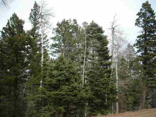 2 Back Basin Rd NE 2 Back Basin Road, Angel Fire, NM 87710 (MLS #93416) :: The Chisum Realty Group