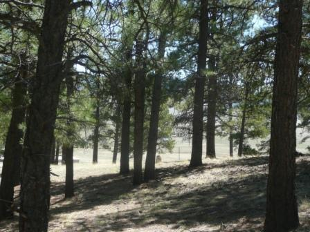 Lot 17 Monte Verde Lake 1 Amended, Angel Fire, NM 87710 (MLS #95715) :: Angel Fire Real Estate & Land Co.