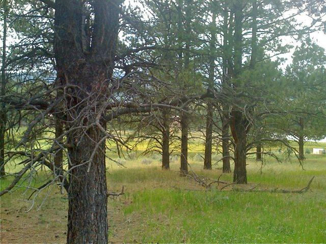 Lot 3A, Blk J Lake Park Way, Angel Fire, NM 87710 (MLS #98761) :: Page Sullivan Group | Coldwell Banker Lota Realty