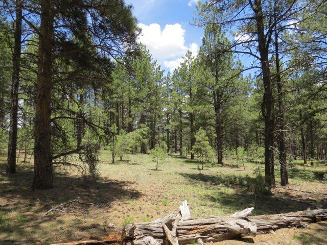 Lot 38 Valle Grande Trail South, Angel Fire, NM 87710 (MLS #103072) :: Angel Fire Real Estate & Land Co.