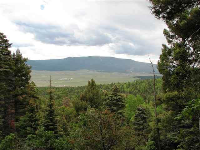 Lot 62 Taos Pines Ranch Road - Photo 1