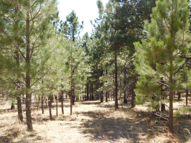 Lot 20 N Phase 2, Off Loggers Mill Way, Angel Fire, NM 87710 (MLS #86225) :: Page Sullivan Group | Coldwell Banker Mountain Properties