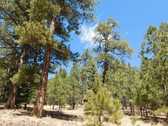 Lot 12 Sawmill Way, Angel Fire, NM 87710 (MLS #98154) :: The Chisum Realty Group