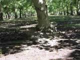 5848 Olive Road - Photo 19