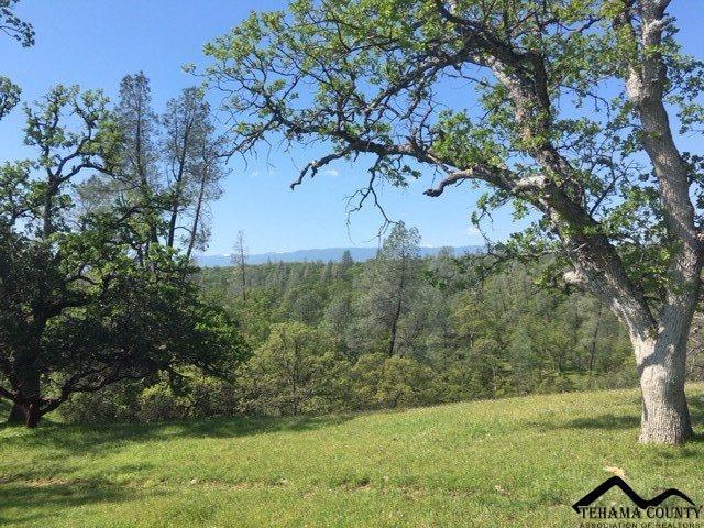 Twisted Pine Lane, Red Bluff, CA 96080 (#20170342) :: Josh Barker Real Estate Advisors
