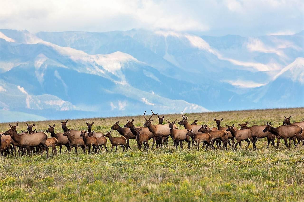 Specie Wilderness Ranch - Photo 1