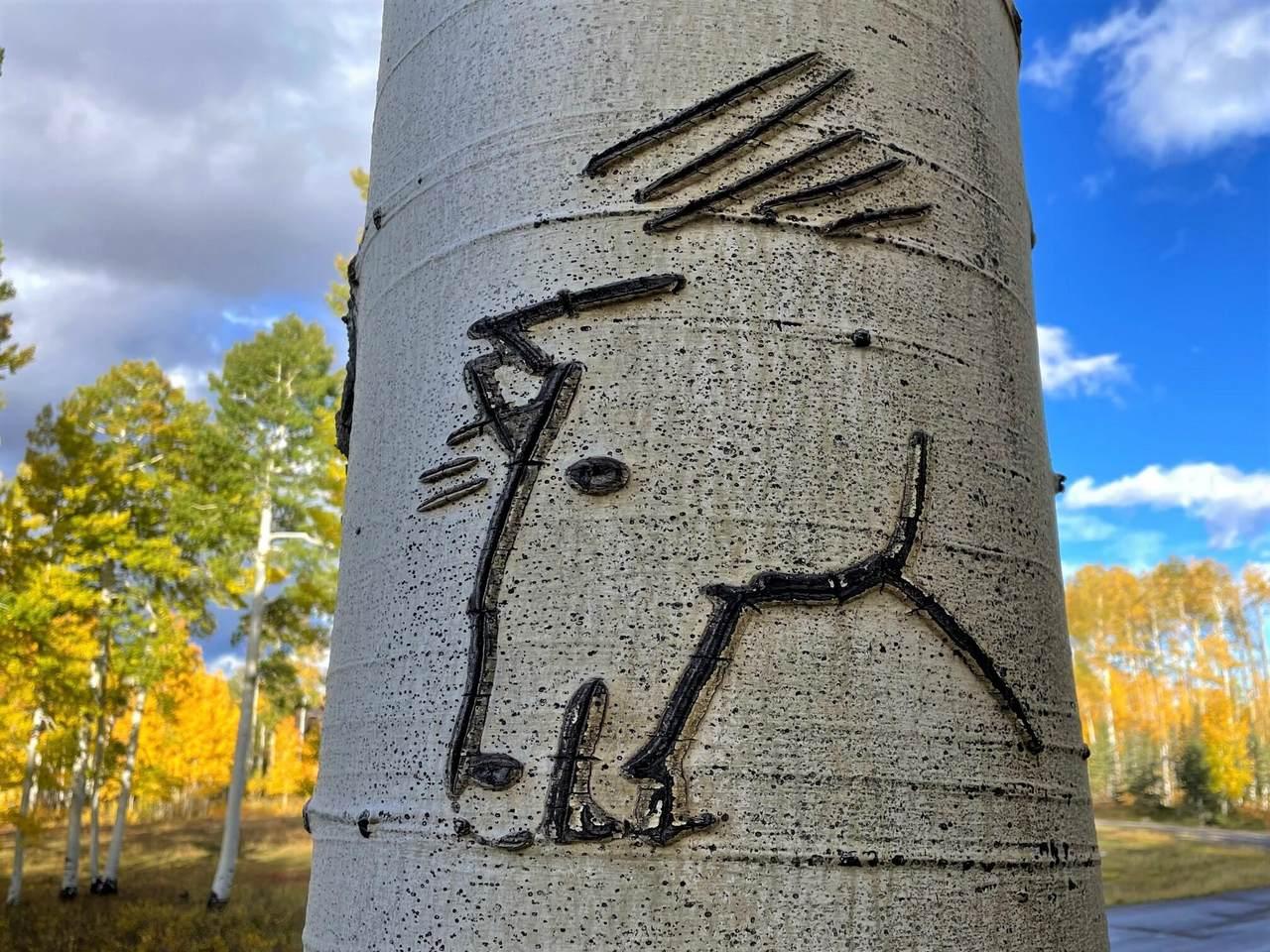 Lot 20 Elk Run Road - Photo 1
