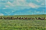 Specie Wilderness Ranch - Photo 6