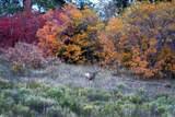 tbd East Specie Mesa - Photo 17