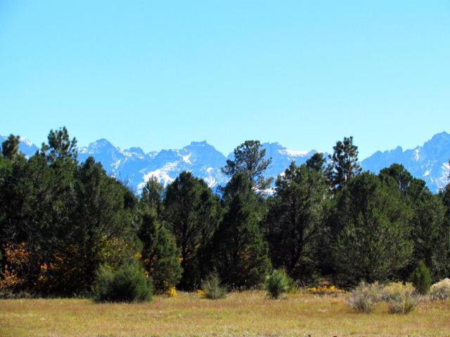 234 Wisteria Drive, Montrose, CO 81403 (MLS #35474) :: Nevasca Realty