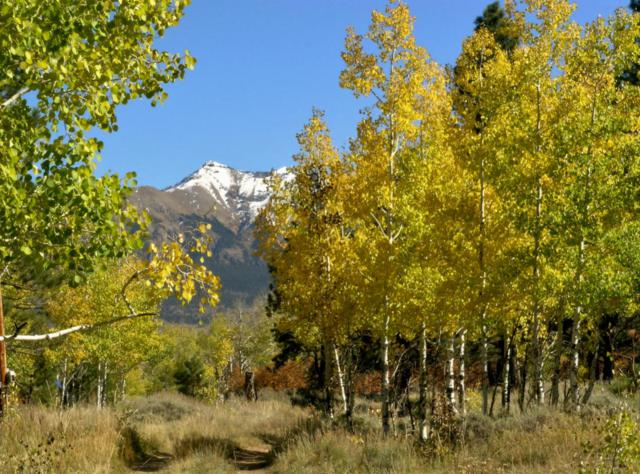 Tract 6 Little Lake Ranch #6, Placerville, CO 81430 (MLS #35880) :: Telluride Properties