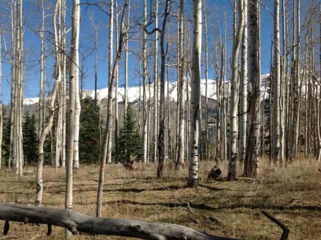 98 Aspen Ridge Drive #30, Mountain Village, CO 81435 (MLS #35884) :: Nevasca Realty