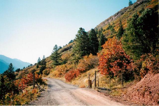 4151 County Road 17, Ridgway, CO 81432 (MLS #35932) :: Telluride Properties