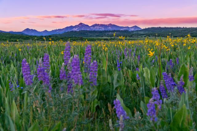 4175 County Rd X48, Placerville, CO 81430 (MLS #36851) :: Telluride Properties