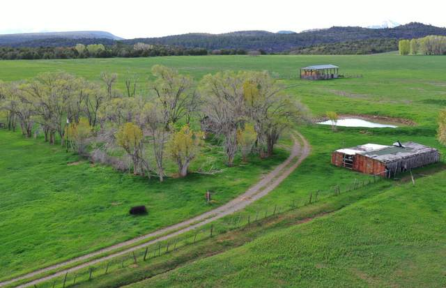 1494 County Road X45, Norwood, CO 81423 (MLS #38429) :: Compass