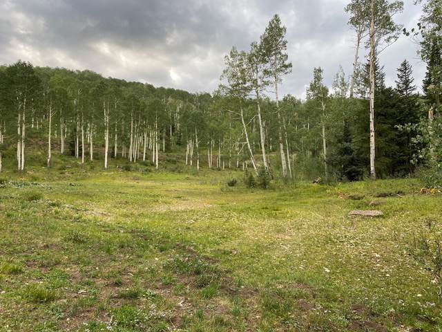 TBD Elk Run Road, Telluride, CO 81435 (MLS #38685) :: Compass