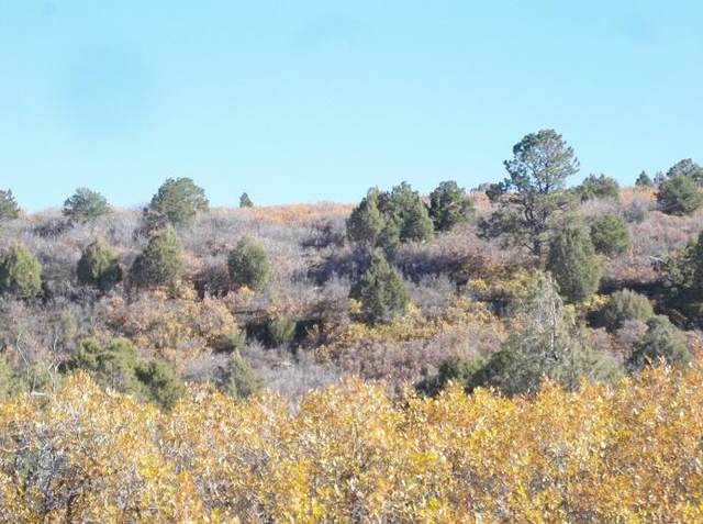 tbd North Gurley Reserve Dr #11, Norwood, CO 81423 (MLS #40092) :: Compass