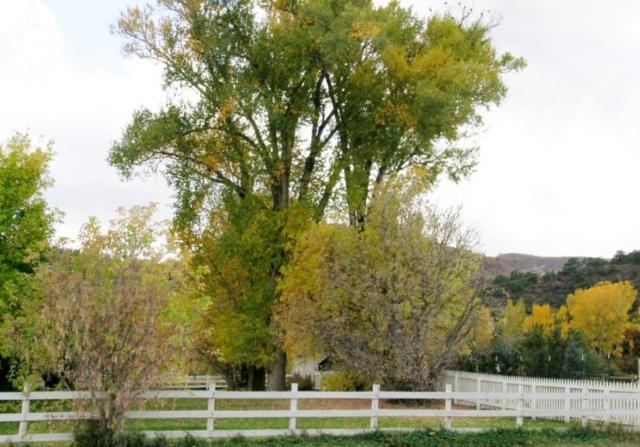 Lot 20 Le Ranch Boulevard #20, Ridgway, CO 81432 (MLS #30643) :: Telluride Properties