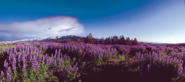 6B Spruce Mountain Lane, Ridgway, CO 81432 (MLS #34868) :: Nevasca Realty
