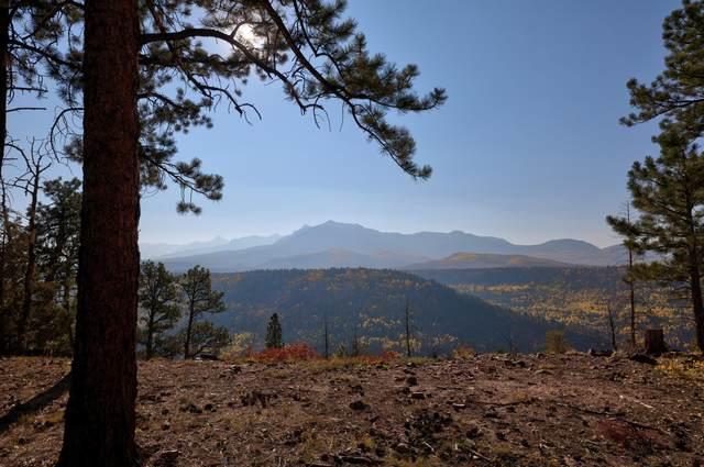 Lot 11 Eagles Nest Road #11, Placerville, CO 81430 (MLS #38876) :: Compass
