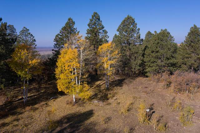 Lot 14 Eagles Nest Road #14, Placerville, CO 81430 (MLS #38877) :: Compass