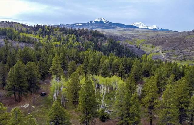 TBD M44 Road 13-5, Placerville, CO 81430 (MLS #39619) :: Telluride Properties