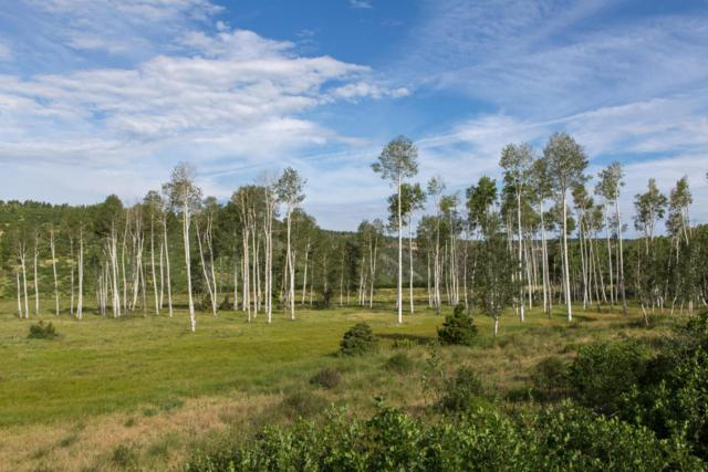 Lot 14 Laughing Dog Road #14, Placerville, CO 81430 (MLS #29216) :: Telluride Properties