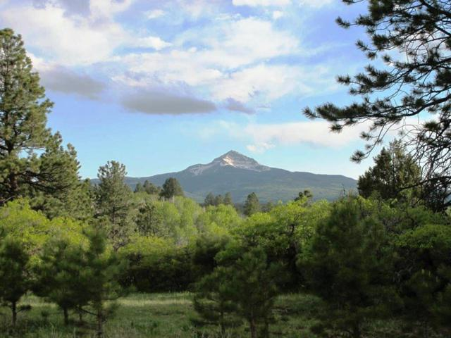 TBD Peninsula Drive #22, Placerville, CO 81430 (MLS #31212) :: Compass