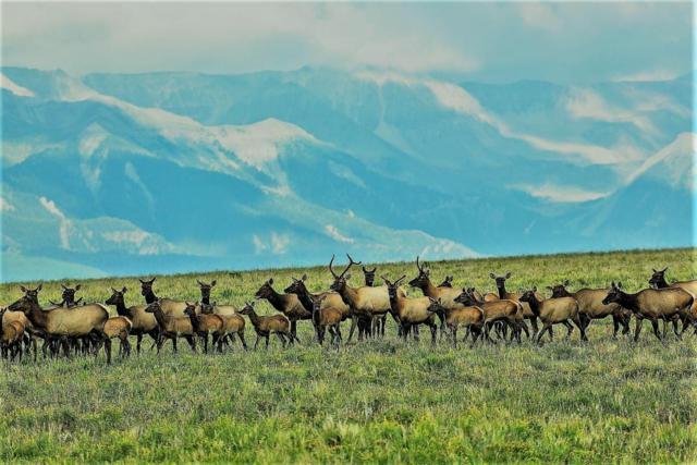 Specie Wilderness Ranch, Placerville, CO 81430 (MLS #36266) :: Telluride Properties