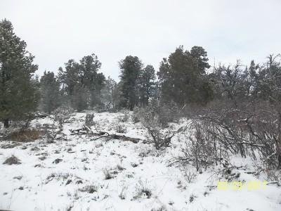 TBD 25 Ragsdale Road, Norwood, CO 81423 (MLS #34728) :: Telluride Properties