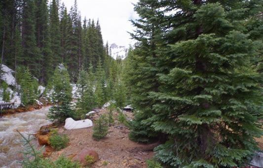 TBD Highway 550, Ouray, CO 81427 (MLS #36788) :: Nevasca Realty