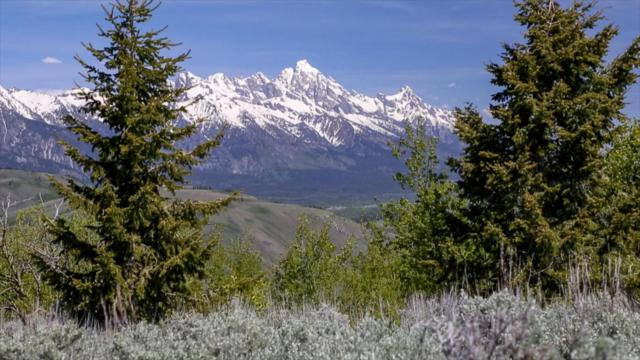 975 Saddle Butte Drive, Jackson, WY 83001 (MLS #17-1161) :: Sage Realty Group