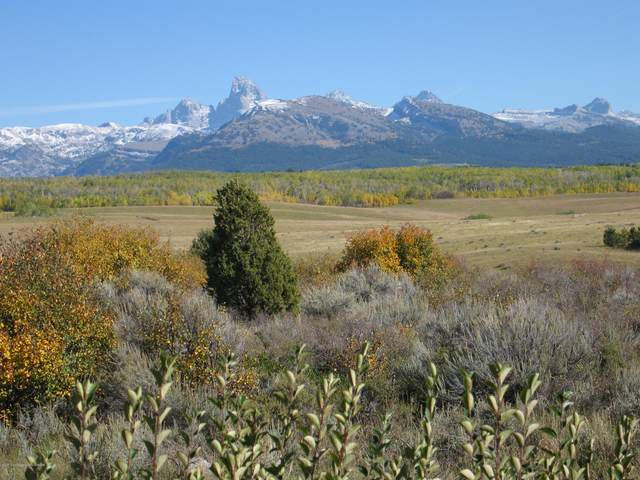 TBD Old Dry Ridge Road, Tetonia, ID 83452 (MLS #20-2614) :: Sage Realty Group