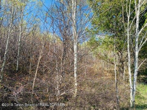 LOT 37 Chokecherry Drive, Alpine, WY 83128 (MLS #19-1082) :: Sage Realty Group