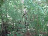 TBD Hidden Valley - Photo 13