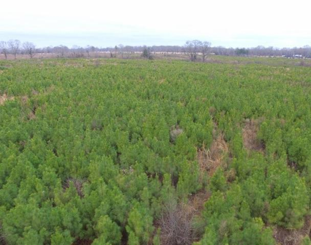 72 +/- acres Cr 4103, New Boston, TX 75570 (MLS #99909) :: Coldwell Banker Elite
