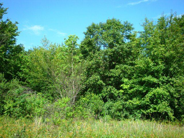 Lot 17 Heather Dr, Texarkana, TX 75503 (MLS #96101) :: Better Homes and Gardens Real Estate Infinity