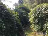 1784 Galilee Road - Photo 12