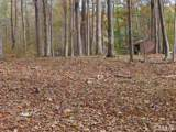 0 Driftwood Court - Photo 16