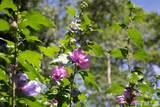 41 White Oak Trail - Photo 29
