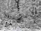 15.10 acres Old Allensville Road - Photo 1