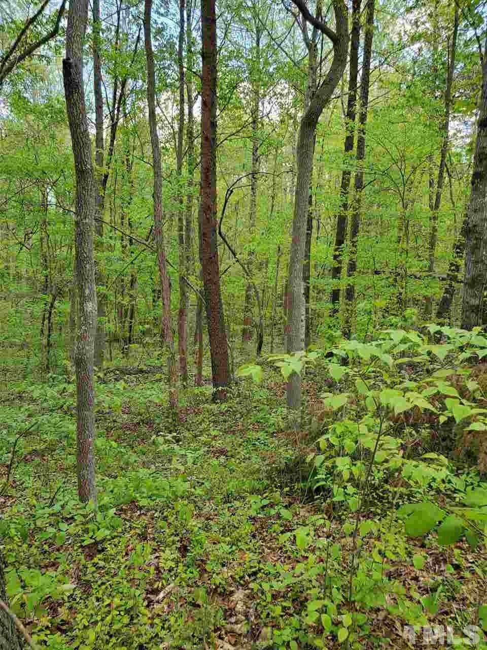Lot 5 Nc 62 Highway - Photo 1