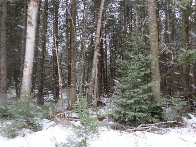 Na Soyers Lake Rd, Minden Hills, ON  (#X4026225) :: Apex Realty Network