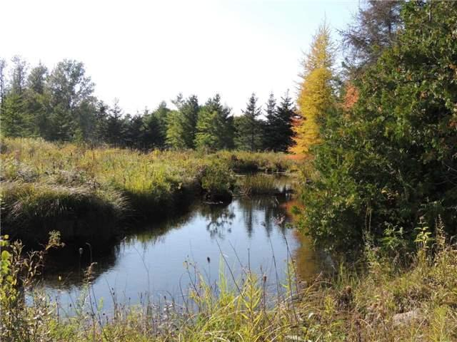 Lot 156 Highway 10 Rd, Grey Highlands, ON N0C 1E0 (#X4297786) :: Jacky Man | Remax Ultimate Realty Inc.