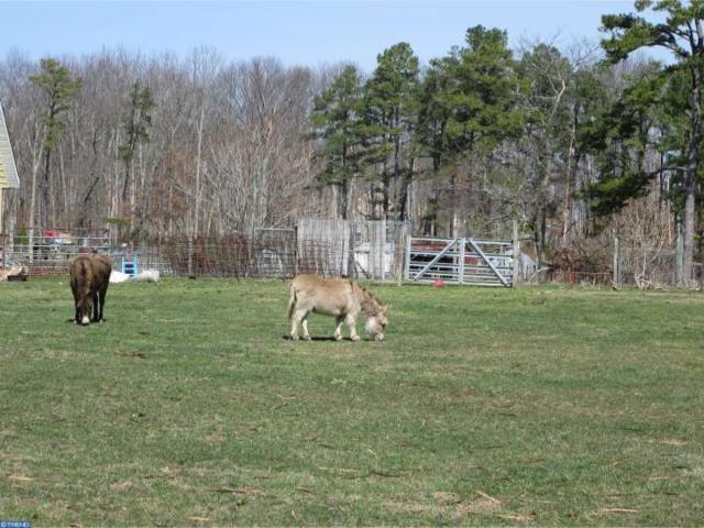 004 Trotters Lane, Sicklerville, NJ 08081 (MLS #6747910) :: The Dekanski Home Selling Team