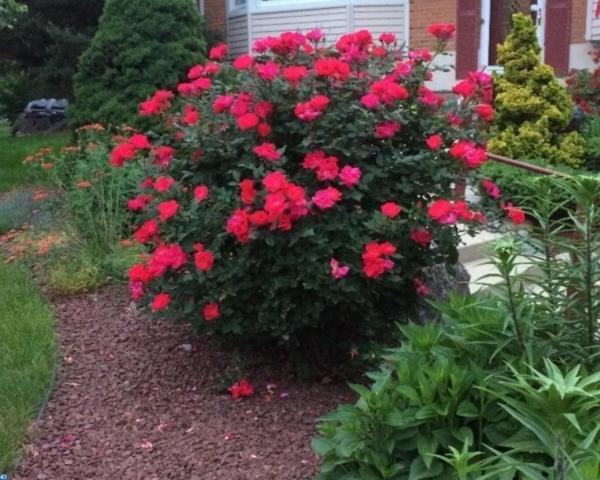 2 Millstone Drive, East Windsor, NJ 08512 (MLS #7083755) :: The Dekanski Home Selling Team