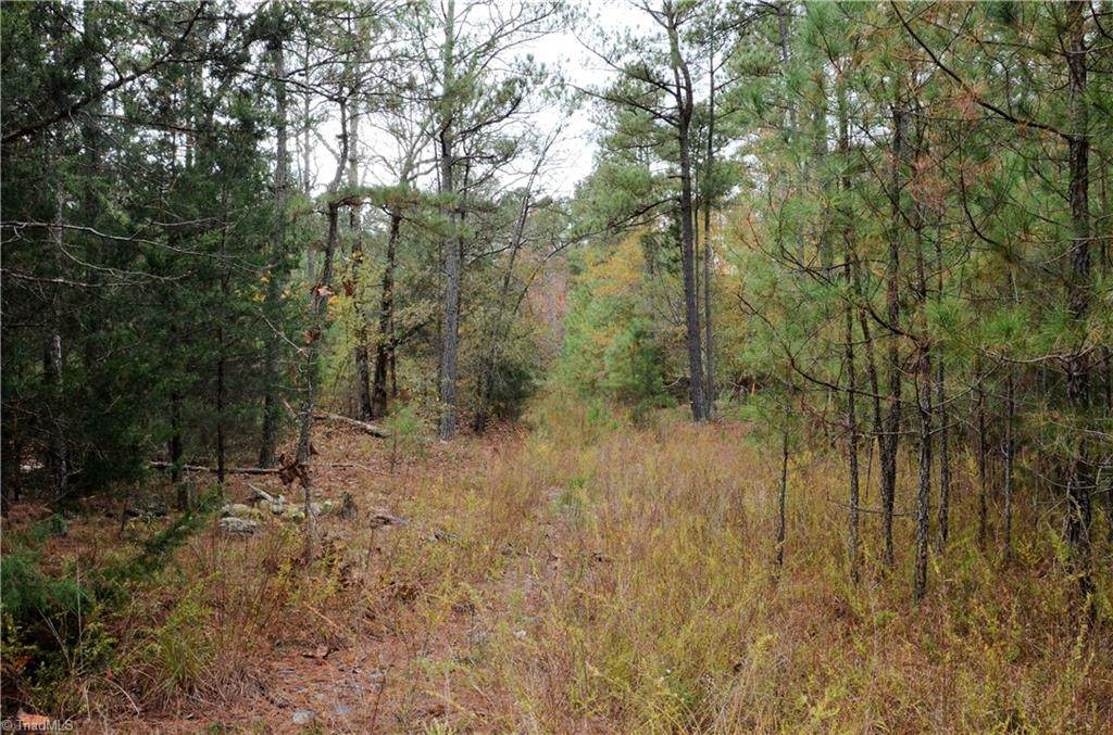 Lot 2 Collins Mountain Road - Photo 1