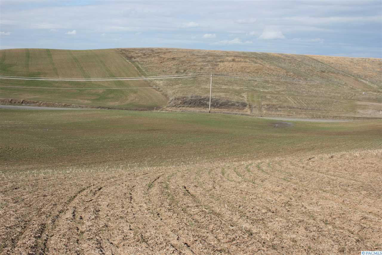 31 Golden Wheat Lane - Photo 1