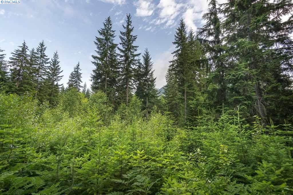 TBD Lodge Creek Land - Photo 1